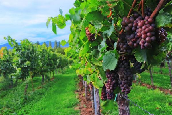 wine-2799719__480
